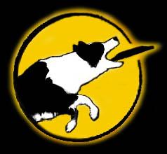 http://www.endless-dog-fun.nl/nieuwe-logo3.jpg